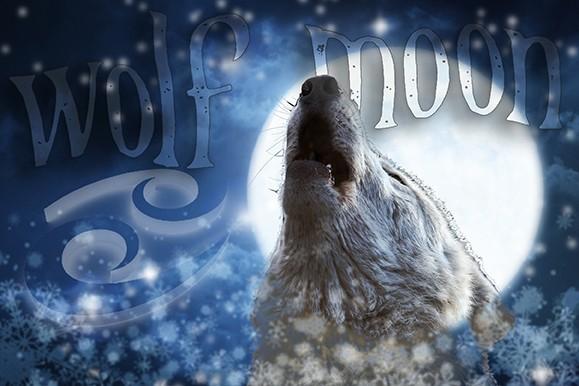 Release Your Inner Wolf OMara Tarot