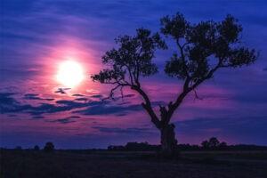 Full Strawberry Moon in Capricorn